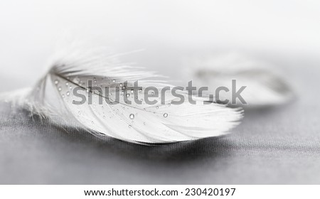 White feather with water drops on grey background - stock photo