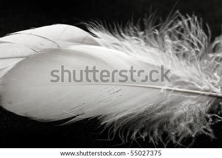 white feathers against black background - stock photo