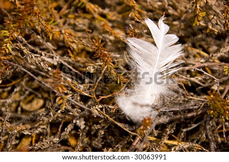 White feathers on the forest land - stock photo