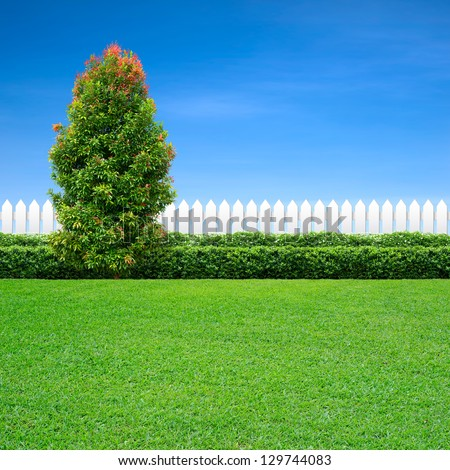 white fence and green hedge with ornamental tree on blue sky - stock photo