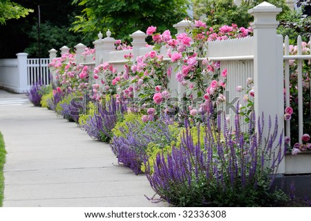 White fence with flowers. Pink roses, blue sage, purple catmint, green and yellow lady's mantel - stock photo