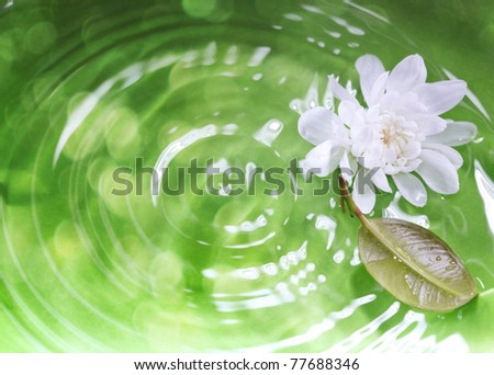 White flower and leaf on a green liquid background with ripples and reflections. Close-up photo. Shallow depth of field added for natural view - stock photo