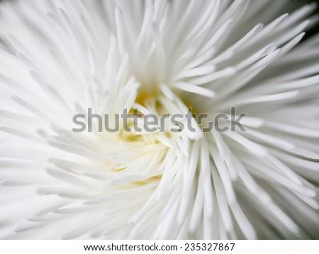 White flower close-up - stock photo