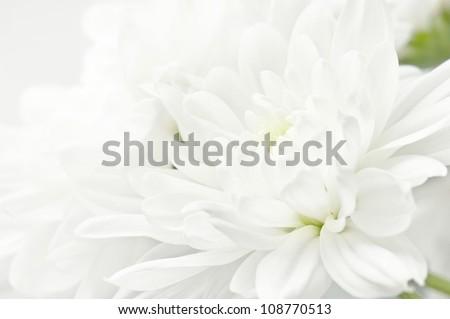 White flower closeup - stock photo