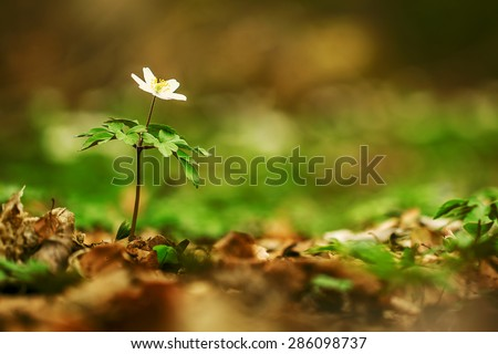 white flower in forest - stock photo