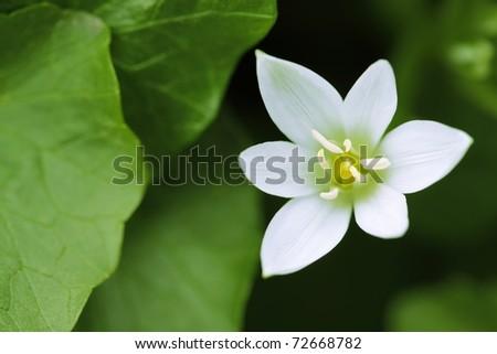 White flower in green leaves - stock photo