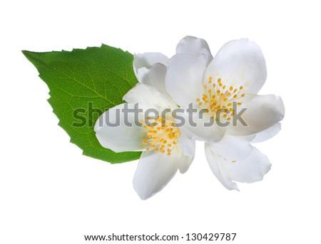 White flower (jasmine) isolated on white background. - stock photo