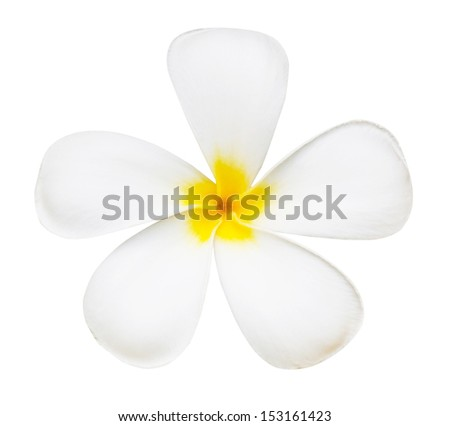 White flower of temple isolated - stock photo