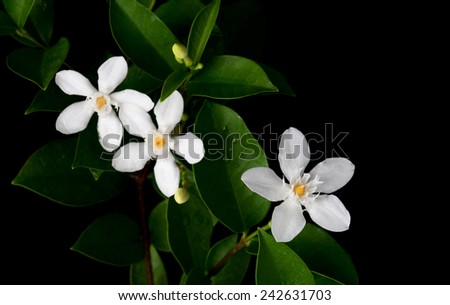 white flower on black - stock photo