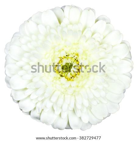 White flower on isolated background - stock photo