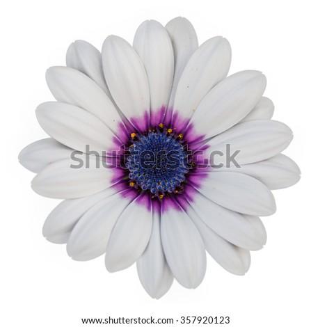 White flower on white background - stock photo
