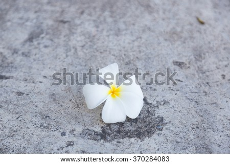 White flower that fell on the floor. White flower that fall from the trees on the pathway in the garden. - stock photo