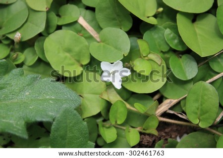 white flower with green leaves background - stock photo