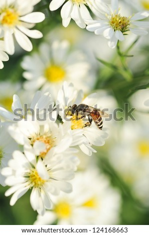white flowers and bee with shallow DOF. - stock photo