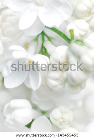 white flowers background - stock photo