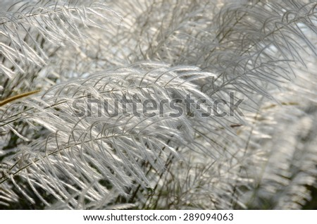 White flowers fresh grass. - stock photo