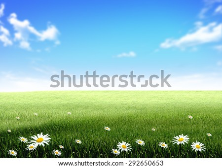 white flowers green grass hill, lawn, field, over blue sky white clouds background wallpaper template - stock photo