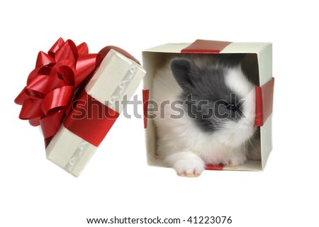 white  fluffy rabbit sits in  box for  gift - stock photo
