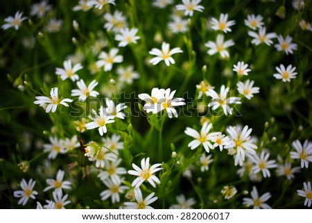 white forest flowers - stock photo