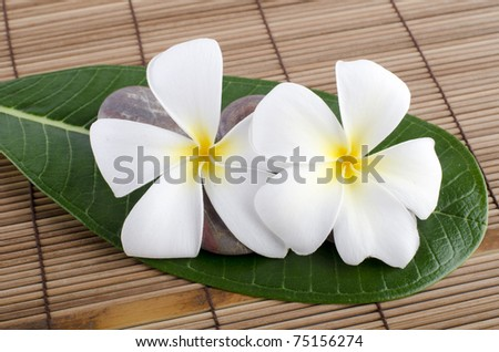 White frangipani and therapy - stock photo