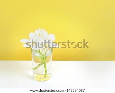 White Frangipani in a glass vase. - stock photo
