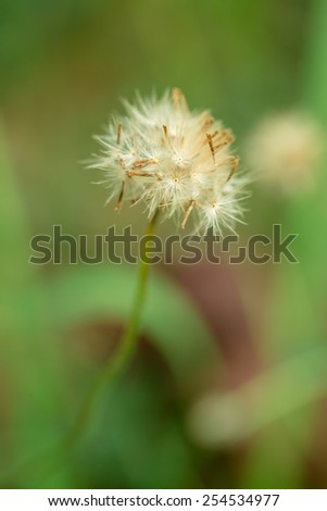 White glass flower in green field - stock photo