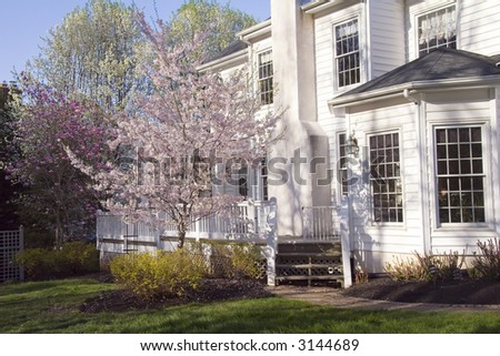 White home's backyard with blossoming Magnolia, Weeping willow, and cherry trees in bloom. - stock photo