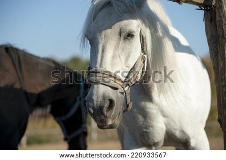 White horse against blue cloudy sky  - stock photo