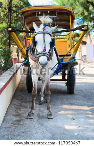 White horse and traditional tourist carriage cart in Indonesia, Gilli islands, Indonesia - stock photo