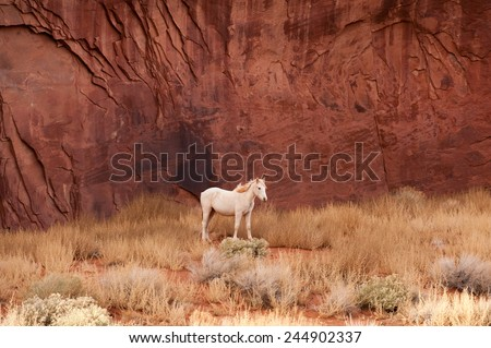 White horse by the red rocks of Navajo Monument Valley - stock photo