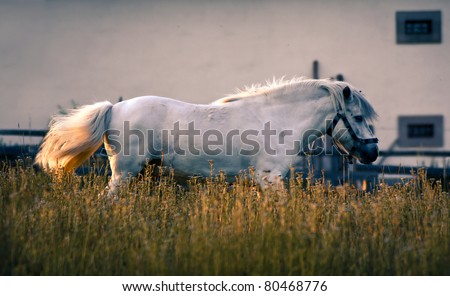 White horse galloping on the green meadow - stock photo