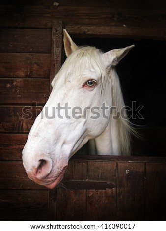 White Horse head watching from the window of his box on a stable - stock photo