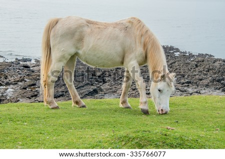 White Horse  Horse grazing on common land close to the sea - stock photo