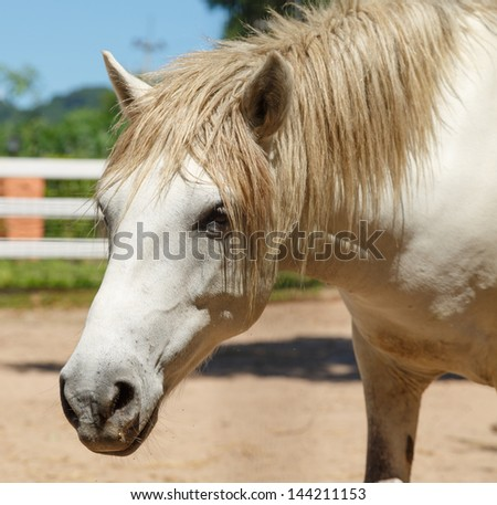 white horse in box stall near hill - stock photo