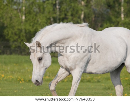 white horse in summer - stock photo