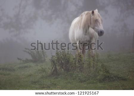 white horse in the fog - stock photo