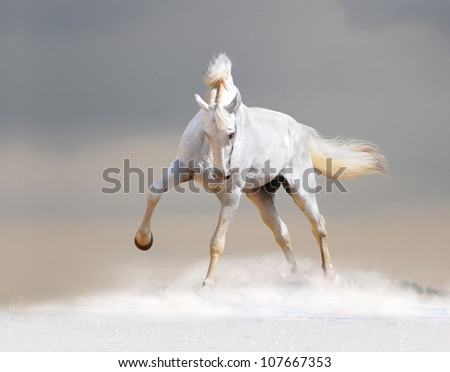 white horse in winter desert - stock photo