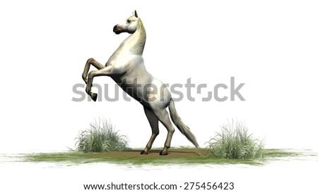 white horse isolated on white background - stock photo