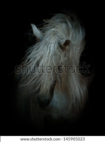 white horse on black - stock photo