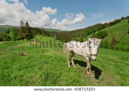 White horse on the mountain pasture. Rural landscape in the mountain valley with animal under cloudy sky - stock photo