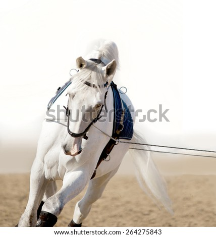 white horse portrait coaching in hands - stock photo
