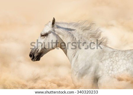 White horse portrait in art backgrounds - stock photo
