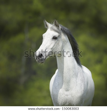 White horse, portrait on the green background - stock photo