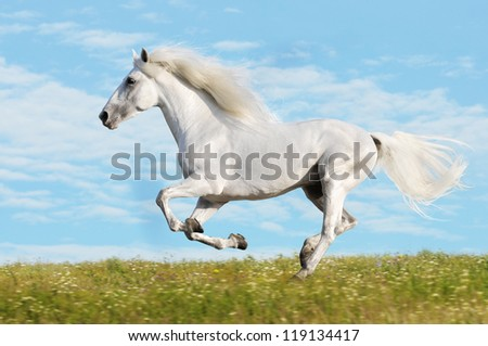White horse runs gallop on the meadow on sky background - stock photo