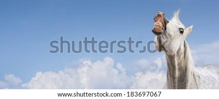 white horse smiling on sky background,banner  - stock photo