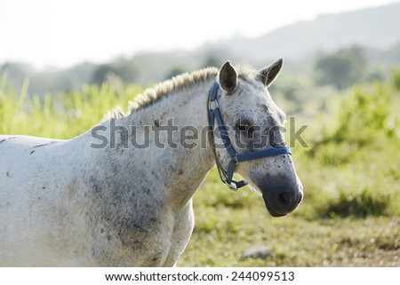 White horse standing in a field of grass - stock photo