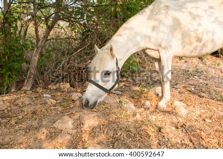 White horse standing in a jungle - leaves sillouette on The Old Grey Mare  - stock photo