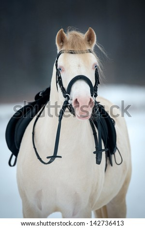 White horse with saddle and bridle in winter. - stock photo