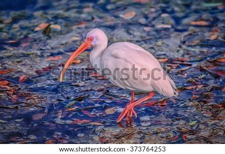 White ibis in breeding plumage,photo art - stock photo