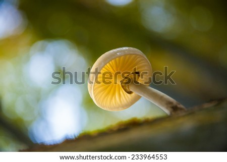 white jelly fungi on a fallen tree in a forest. Shallow depth of field. - stock photo